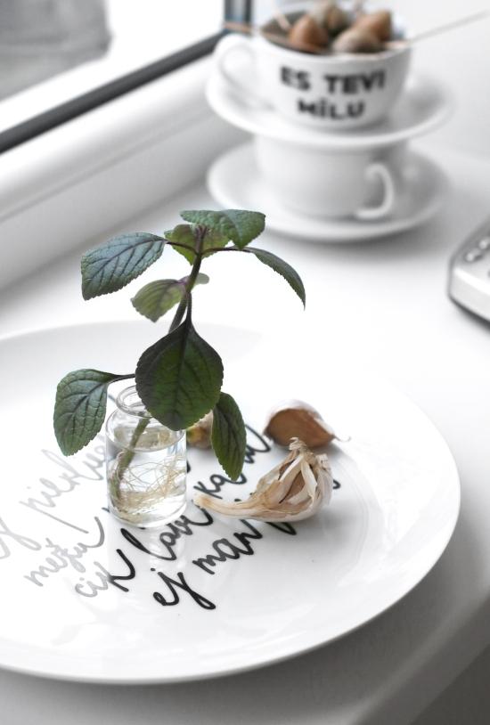 Avokado audzešana